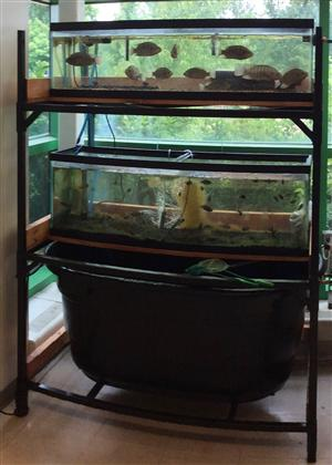 Aquaponics Fish Tanks