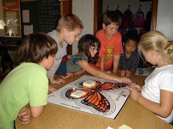 3rd graders studying the life cycle and migration of Monarchs