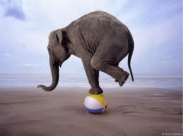Elephant balancing on beach ball