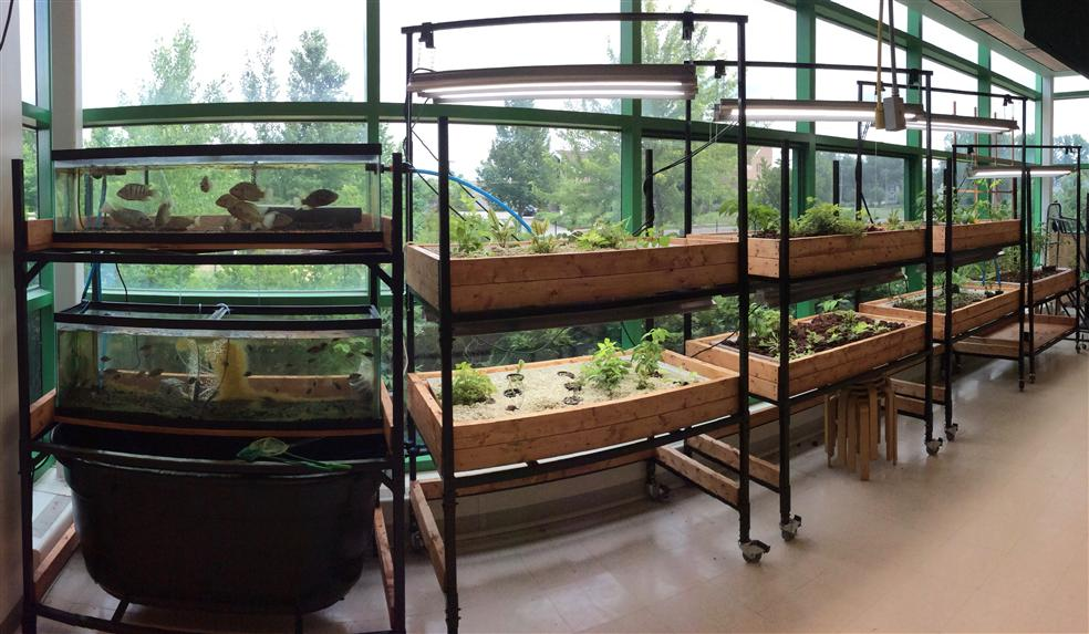 Crossroads Aquaponics Large System