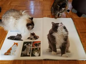 Cats reading about themselves!